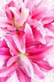 Rosa Lilien auf Weinlesehintergrund Lizenzfreies Stockbild