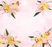 Rosa Lilien Feld lizenzfreies stockbild