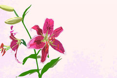 Rosa Lilienhintergrund der Weinlese Stockbilder