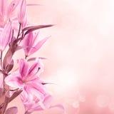 Rosa liljabakgrund arkivfoton