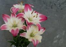 Rosa liljablommabukett med vattendroppar Arkivfoto
