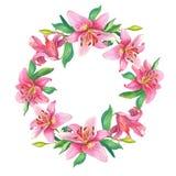 Rosa liljor Den blom- vattenfärgen blommar kransen Royaltyfri Bild
