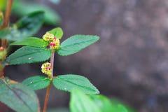 Rosa liten blommaisolat på blackground arkivfoton