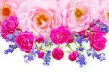 Rosa lockiga rosor, små vibrerande rosa rosor och provence lavendel royaltyfria foton