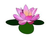 Rosa Lotos/Lilly-Blume auf Logo-Designillustration mit drei grüner Blättern Lizenzfreies Stockfoto