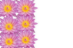 Rosa Lotosblumen-Beschaffenheitshintergrund Lizenzfreie Stockbilder