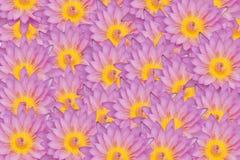 Rosa Lotosblumen-Beschaffenheitshintergrund Lizenzfreies Stockbild