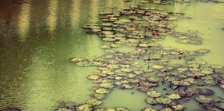 Rosa Lotosteich neben Park mit grünem Wasser Lizenzfreies Stockbild