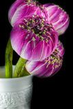 Rosa lotusblommablommor i vasen som isoleras på svart Arkivbild