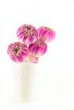 Rosa lotusblommablommor i vasen som isoleras på vit Royaltyfri Foto