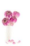 Rosa lotusblommablommor i vasen som isoleras på vit Fotografering för Bildbyråer