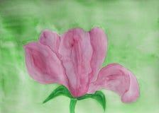 Rosa Magnolie auf Grün Lizenzfreie Stockbilder