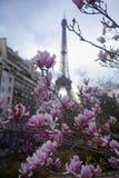 Rosa Magnolie in voller Blüte und Eiffelturm über dem blauen Himmel stockbild