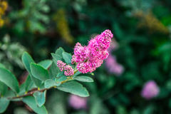 Rosa Makro der Blume Stockfotos