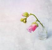 Rosa Malve (Malva) im Kristallglas Stockfotografie