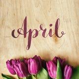 Rosa, manojo de los tulipanes Fotografía de archivo