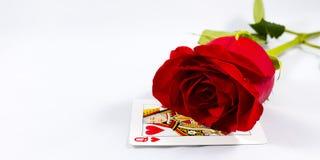 Rosa mit der Königin von Herzen Stockbild