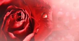 Rosa mjukhet. Royaltyfri Bild