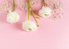 Rosa mode, blommor lägger framlänges bakgrund royaltyfri foto