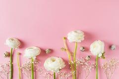 Rosa mode, blommor lägger framlänges bakgrund arkivbild
