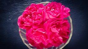 Rosa molto attraente di rosa in ciotola di vetro fotografie stock libere da diritti