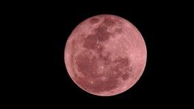 Rosa moon Arkivbild