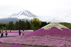 Rosa Moos an Mt fuji Lizenzfreies Stockfoto