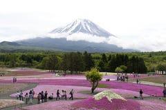 Rosa Moos an Mt fuji Stockfotografie