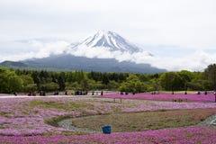 Rosa mossa på Mt fuji Arkivbild