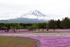 Rosa mossa på Mt fuji Royaltyfria Foton