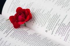 Rosa na Bíblia foto de stock royalty free