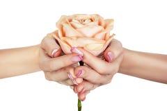 Rosa na fêmea entrega as palmas. Imagens de Stock Royalty Free