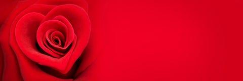 Rosa na forma de um coração, bandeira do vermelho do dia de Valentim fotografia de stock