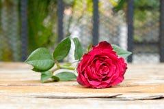 Rosa na madeira Fotografia de Stock