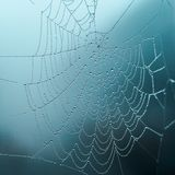 Rosa na sieci na mgłowym dniu, selekcyjna ostrość, zimni brzmienia, tło zdjęcie stock