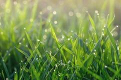 Rosa na zielonej trawie zdjęcie stock