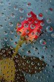 Rosa nas gotas no azul Imagem de Stock