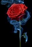 Rosa nas nuvens de fumo Imagens de Stock