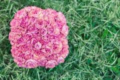 Rosa nejlikor Fotografering för Bildbyråer