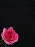 Rosa nell'angolo Immagine Stock Libera da Diritti