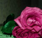 Rosa nella rugiada Fotografie Stock Libere da Diritti