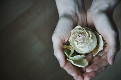 Rosa nelle mani Immagini Stock Libere da Diritti