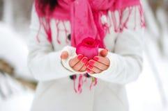 Rosa nelle mani di una ragazza Fotografia Stock Libera da Diritti
