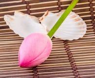 Rosa Nelumbo nucifera Blumen, Abschluss oben, lokalisierter, hölzerner Hintergrund Lizenzfreies Stockfoto