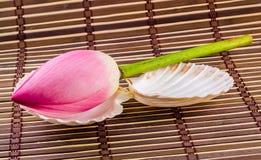 Rosa Nelumbo nucifera Blumen, Abschluss oben, lokalisierter, hölzerner Hintergrund Lizenzfreie Stockfotos