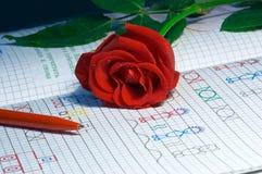 Rosa no caderno imagem de stock royalty free