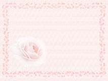 Rosa no frame Imagem de Stock Royalty Free