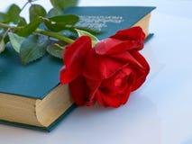 Rosa no livro Fotografia de Stock
