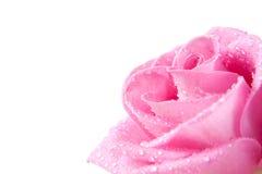 Rosa no orvalho Imagens de Stock