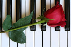 Rosa no piano Fotos de Stock